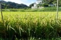 farming_150919_01