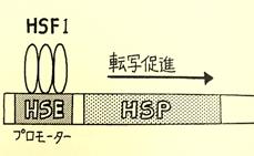 グラフィックス5矢澤さん