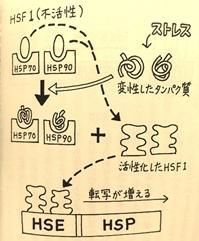 矢澤さんグラフィックス4